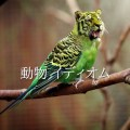 英語 動物 イディオム1
